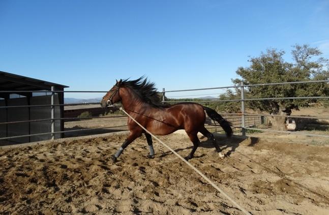 64-65 caballos
