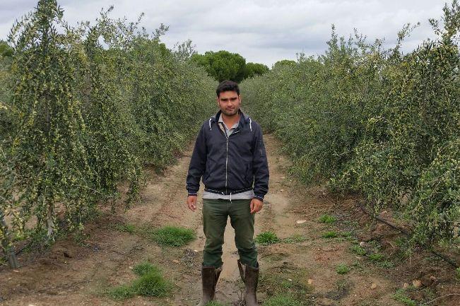 42 Juan Parras entre olivos