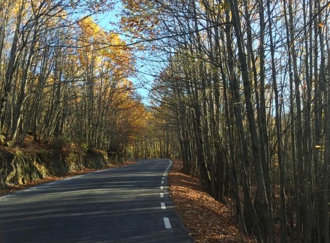 Carretera entre bosques en Sierra de Gata