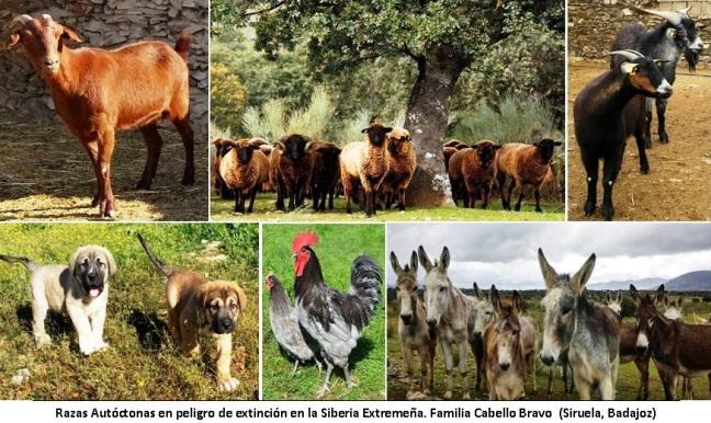 68-69 Razas Autóctonas Familia Cabello Bravo (Siruela, Badajoz)