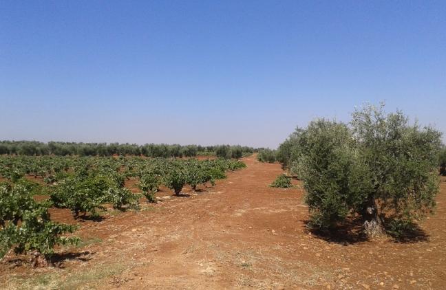 93 cultivos