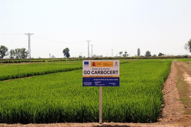 CARBONCERT ensayo parcela de arroz